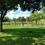 Tropical Park Dog Park